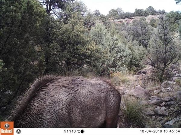 美国野生行物管理局发一张图片难倒不少网友:图中的美洲狮在哪?