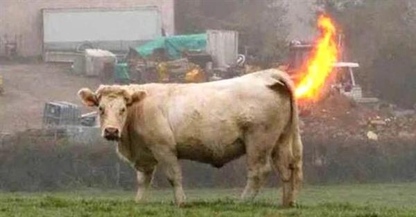 动物会爆炸不奇怪:危急时刻开启的自杀性防御机制