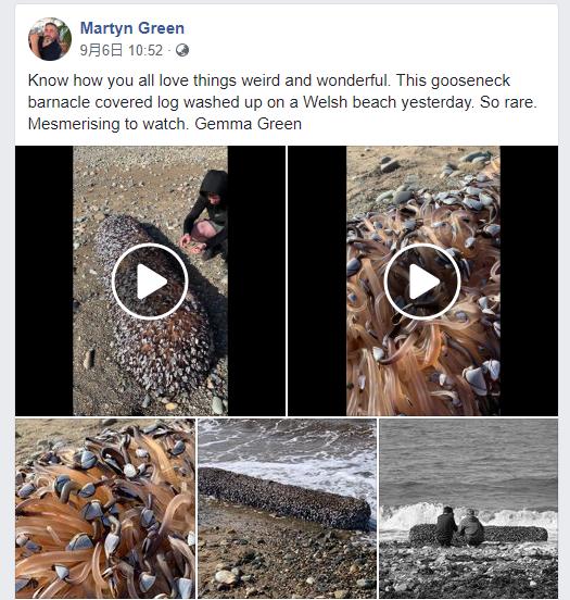 """英国网友海边散步意外发现地狱的""""海鲜"""":价值近45万元"""