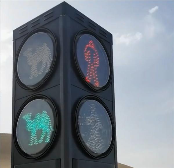 甘肃一景区设置骆驼红绿灯 网友:闯红灯了扣草料吗?