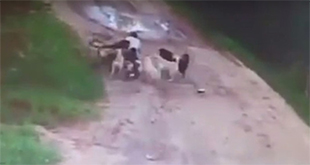 男子坚持喂流浪狗两年 忘带食物遭群狗围攻身亡