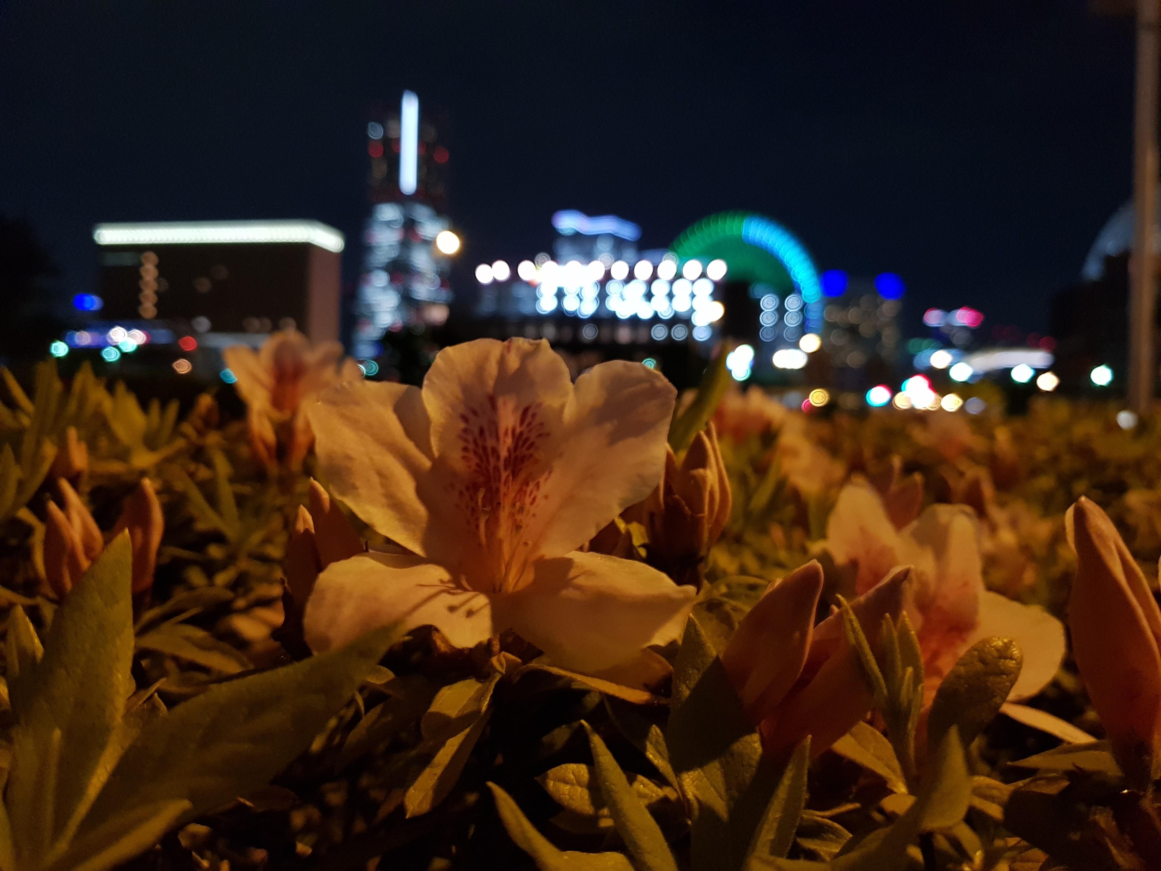iPhone 7 Plus单挑四大安卓旗舰拍照的照片 - 34
