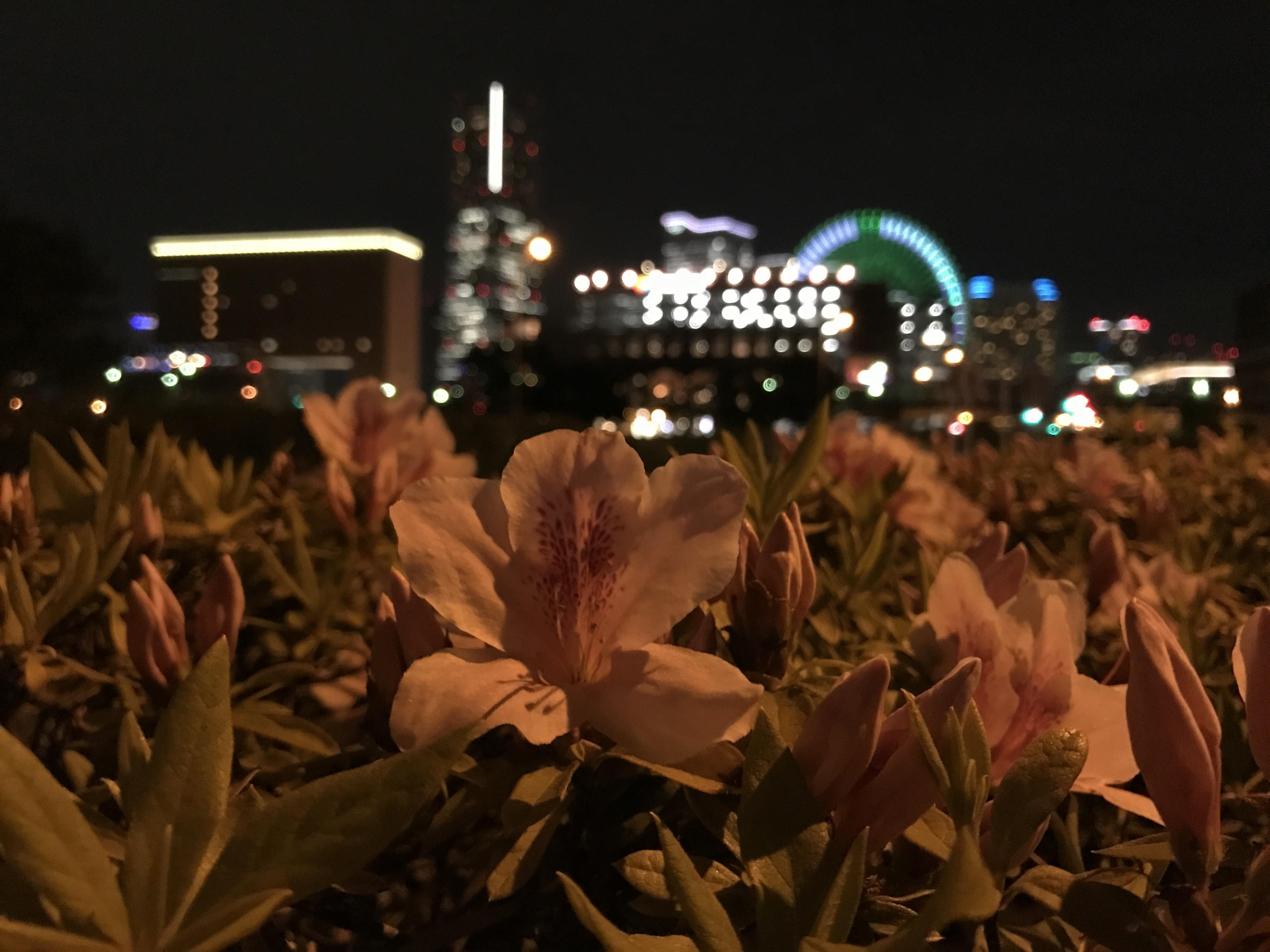 iPhone 7 Plus单挑四大安卓旗舰拍照的照片 - 31