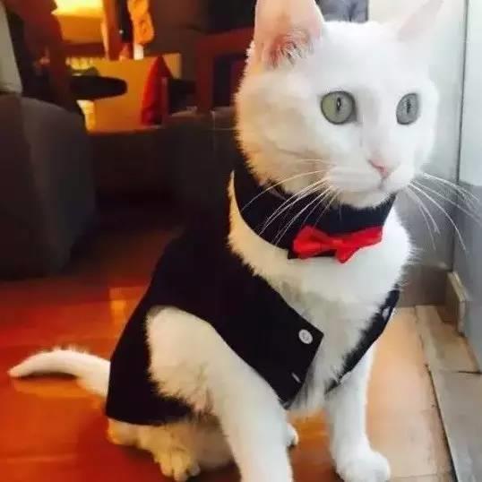2年前一只饿猫走进腾讯 如今成为4万员工之一 风光无限
