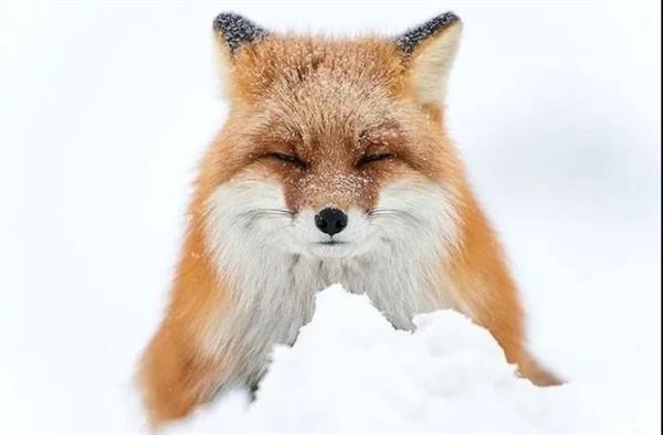 """网上盛传""""神兽""""视频:原来是只火狐狸"""