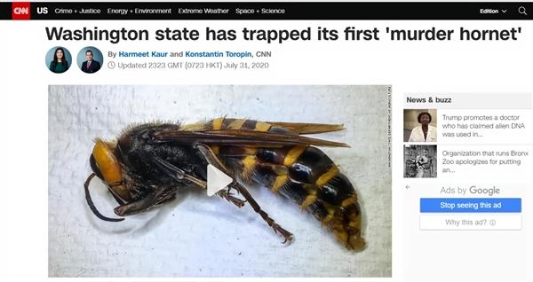 """时隔一年 美国终于抓到第一只""""杀手大黄蜂"""":毒性超强可致命"""