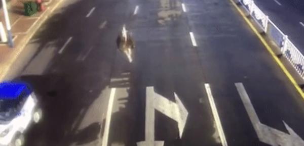 鸵鸟趁主人不注意逃上街头狂奔 网友直呼:离家出走的大宠物