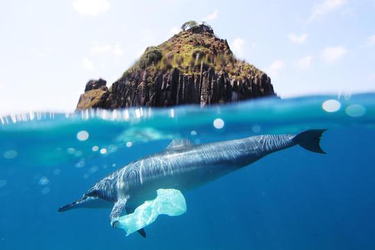 福岛核废水排海:海鲜还能吃吗?