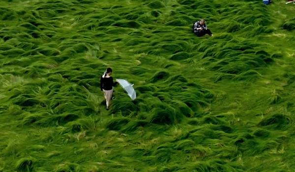 南京石臼湖枯水期仿若龙猫草原 网友:跟动漫里一模一样