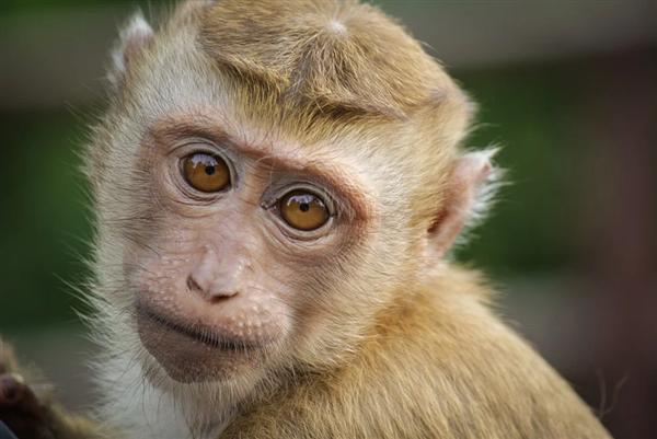 园方回应饲养员直播给猴子化妆