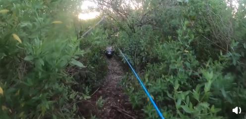 男子钓鱼时被巨鳄突袭:运动相机拍下惊人一幕