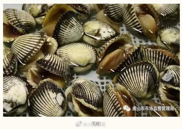 唐山提醒近期不要食用野生毛蚶海虹:严重的可致死