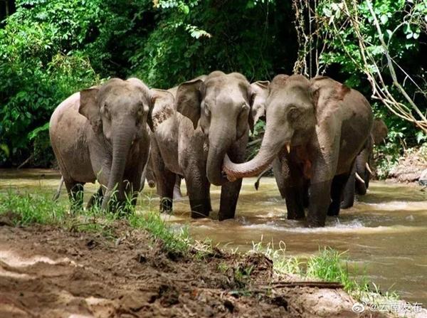 云南北迁野象群最新动向:向西南迁移了6.6公里、人象平安