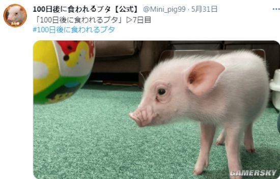 """夺笋 网友晒""""100天后会被吃的猪"""" 每天上传倒计时视频"""