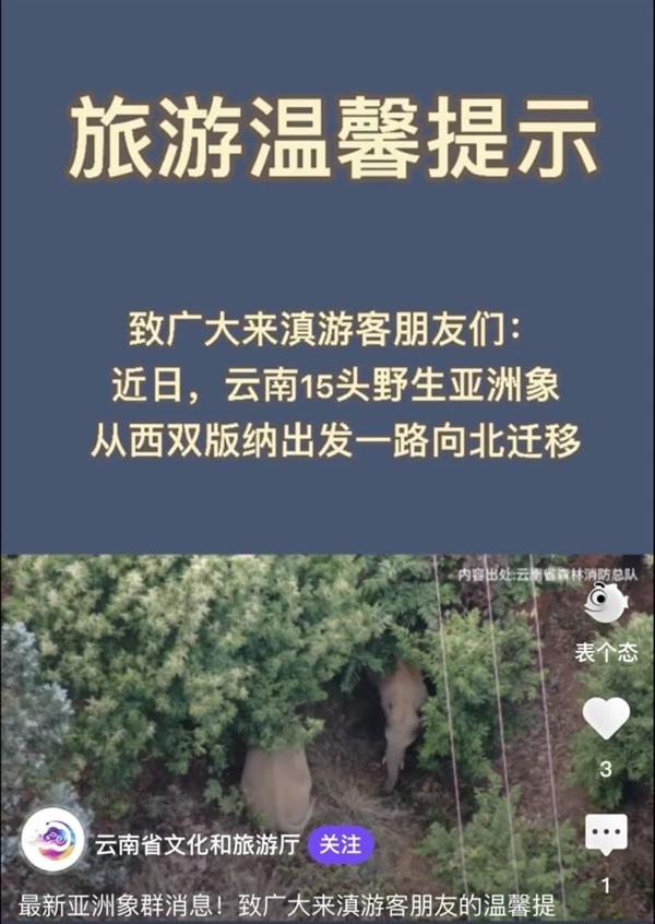 云南离群独象与象群距离增至10公里:现场持续雷阵雨监测防控困难