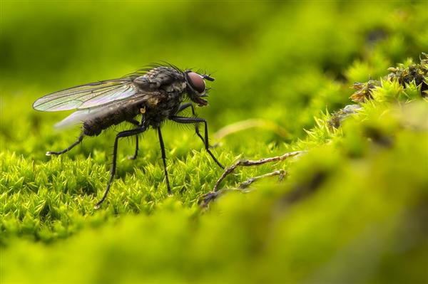 华大基因CEO称苍蝇和人基因相似度达39%:打它属于欺师灭祖