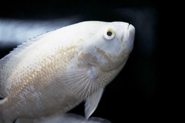 有毒气体变成宝!一氧化碳可以作为鱼类、狗狗食物的原材料