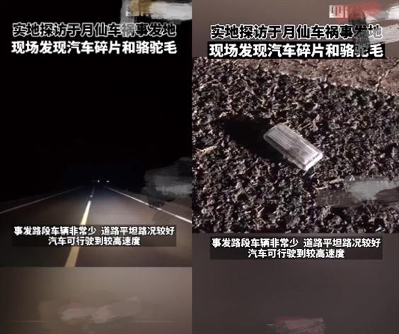实地探访于月仙车祸现场:目击者称骆驼内脏被撞得飞散遍地