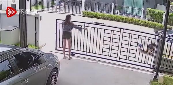 泰国一宠物乌龟反复推开大门逃跑 女主人:惯犯了